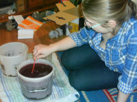 Wine making, day 6.